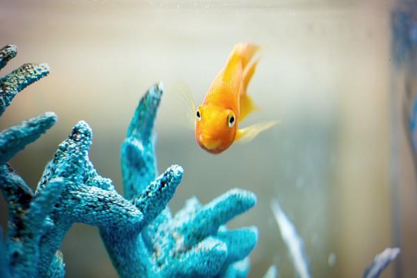 RCN Fish